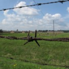 auschwitz camp fence